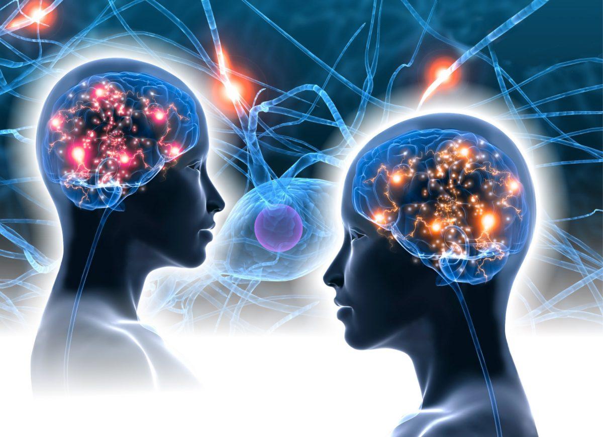 ¿Qué zona del cerebro controla nuestras emociones?