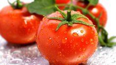 Fruta o verdura, ¿qué es realmente el tomate?
