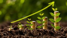 Crecimiento de los ahorros