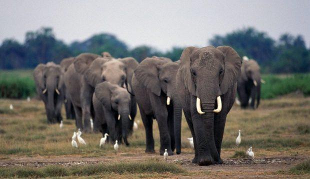 El elefante y su inteligencia