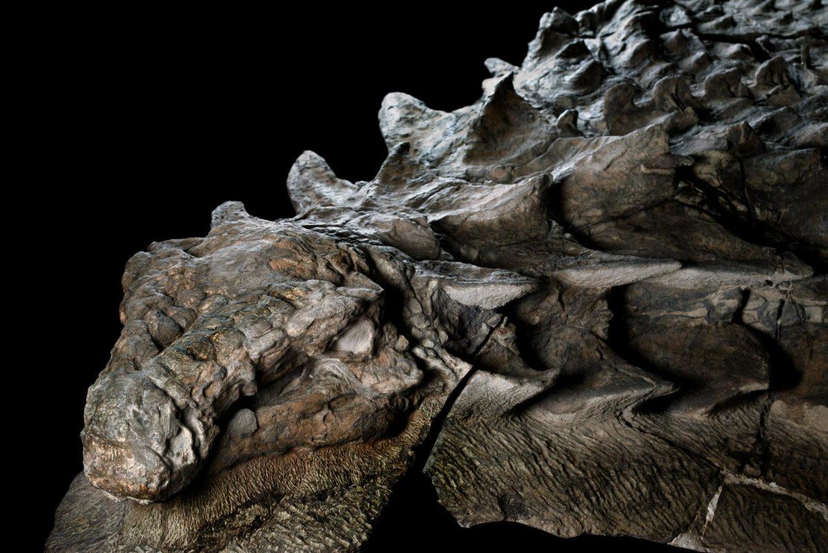 Encuentran el fósil de dinosaurio mejor conservado de la historia.
