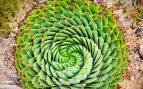 fibonacci (1)