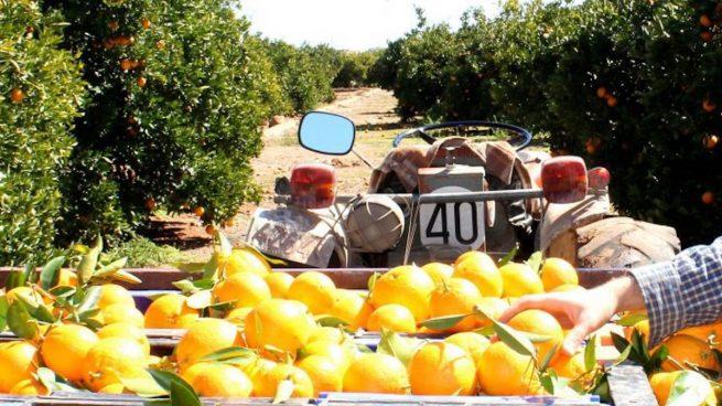 Naranjas del Carmen