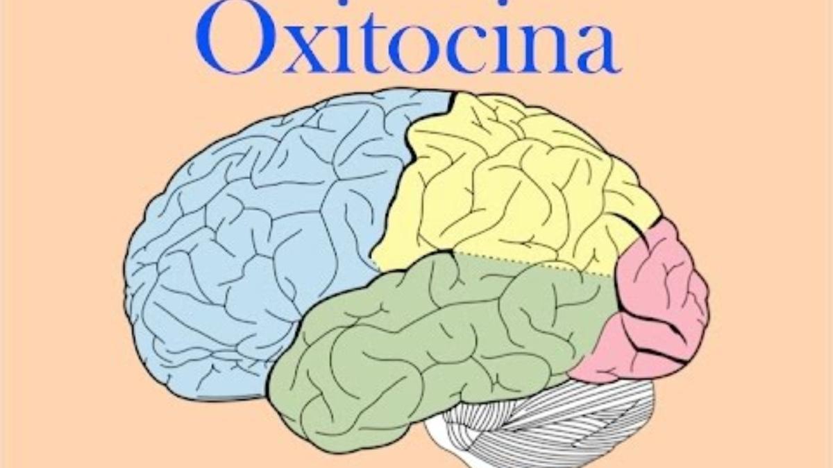 Lo que debes saber sobre la oxitocina