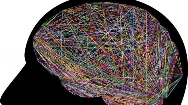 Las neuronas del cerebro