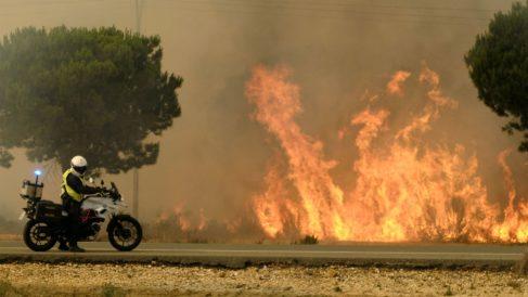 Incendio en Moguer, que arrasó más de 6.000 hectáreas de de Doñana (Foto: EFE).