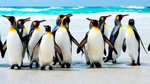 Los pingüinos son unas aves fascinantes