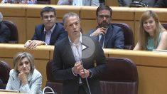 Ander Gil, nuevo portavoz del PSOE en el Senado.