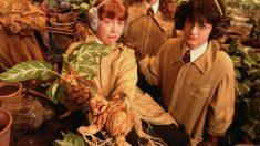 La mandrágora en el mundo de Harry Potter