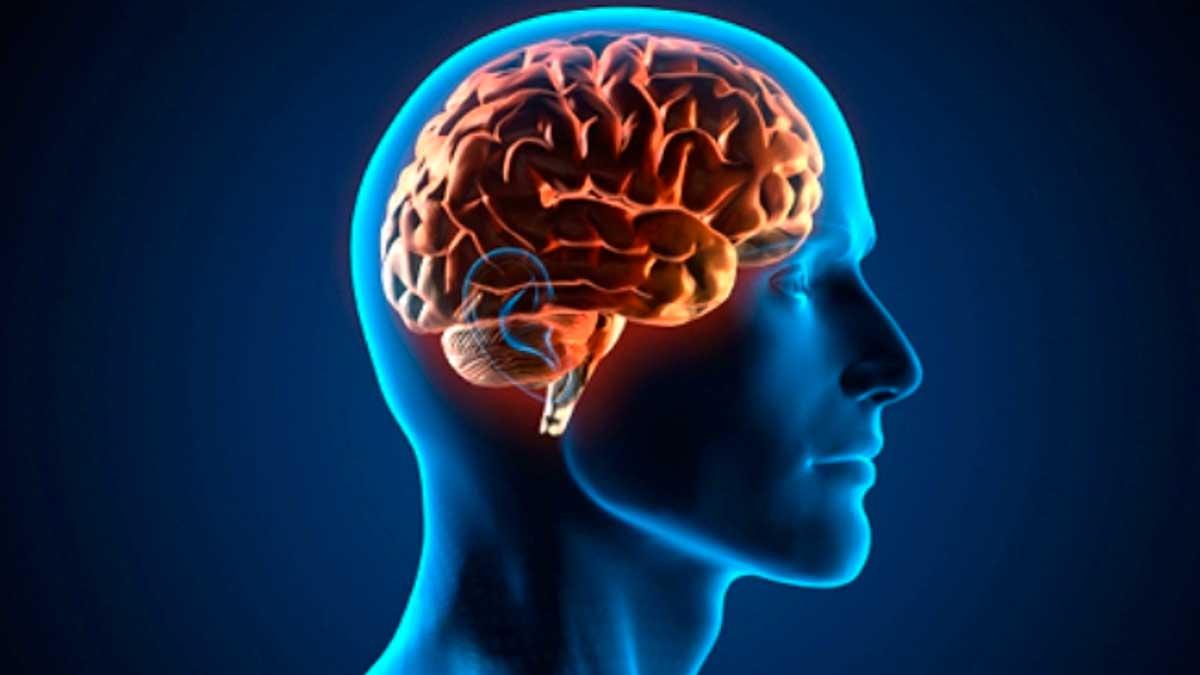 El cerebro aún guarda muchos secretos