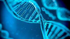 El ADN es el encargado de guardar la herencia genética