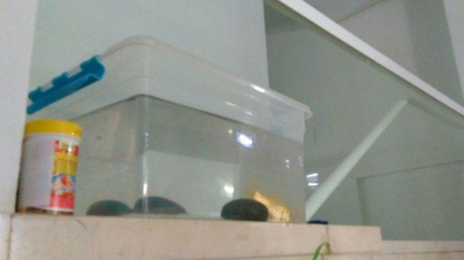 Pesesín, el pez que ha quedado al cuidado de la comunidad de vecinos con su dueño de vacaciones.
