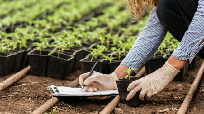 España es el país de Europa con mayor producción ecológica plantada y uno de los 5 mayores del mundo