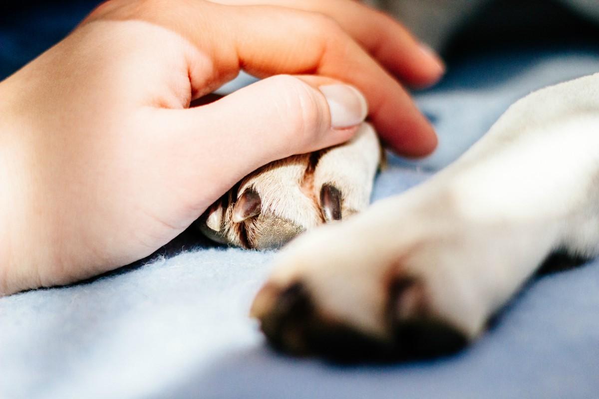Cómo saber si mi perro tiene parvovirus