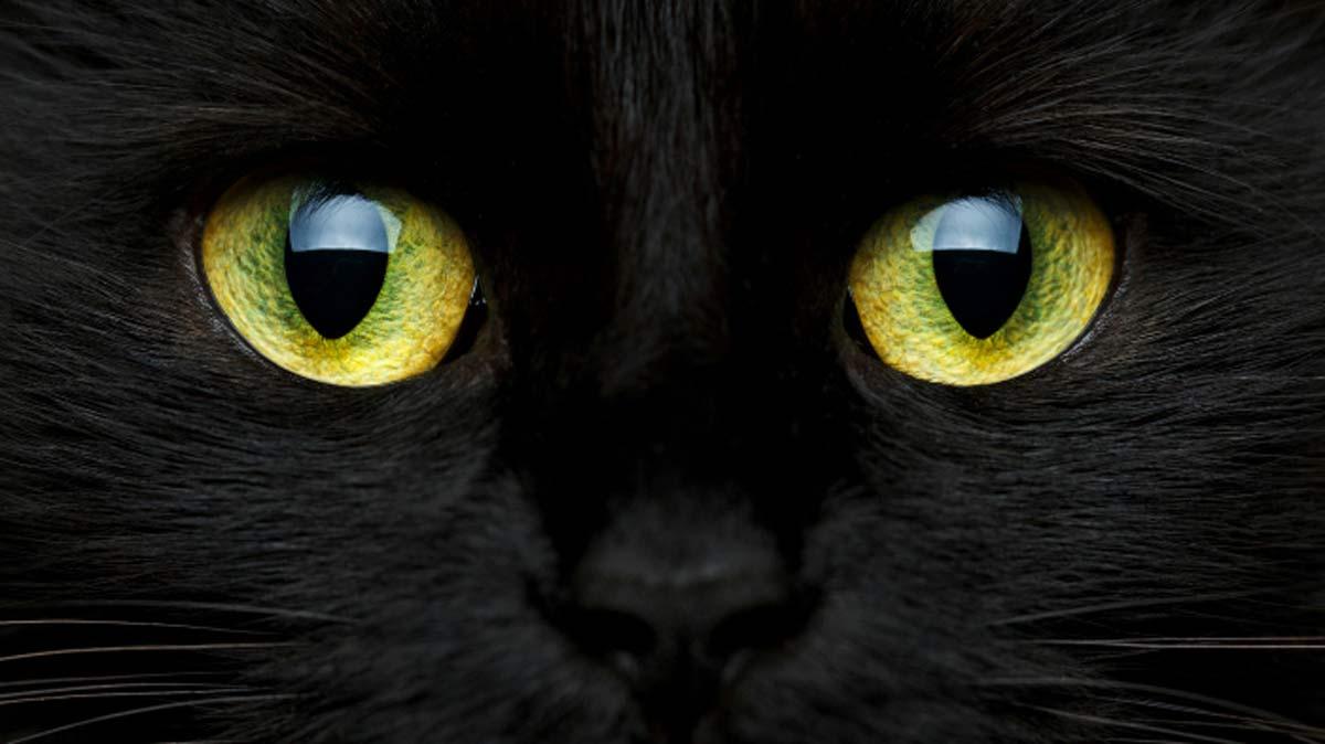 Por qué los gatos negros traen mala suerte?