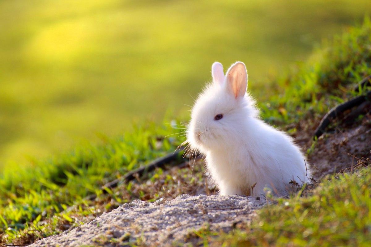 Pasos para cuidar a un conejo toy de forma correcta