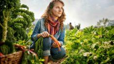 Crear un huerto ecológico casero puede ayudarte a controlar el estrés.