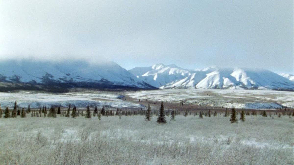 La tundra invernal