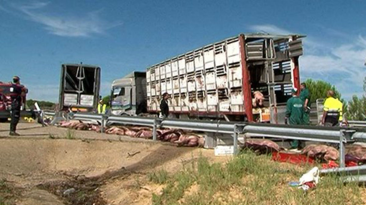 El camión accidentado en la Autovía A-52, a la altura de Manganeses de la Polvorosa.