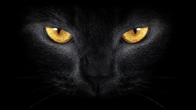 fotos de ojos de gatos
