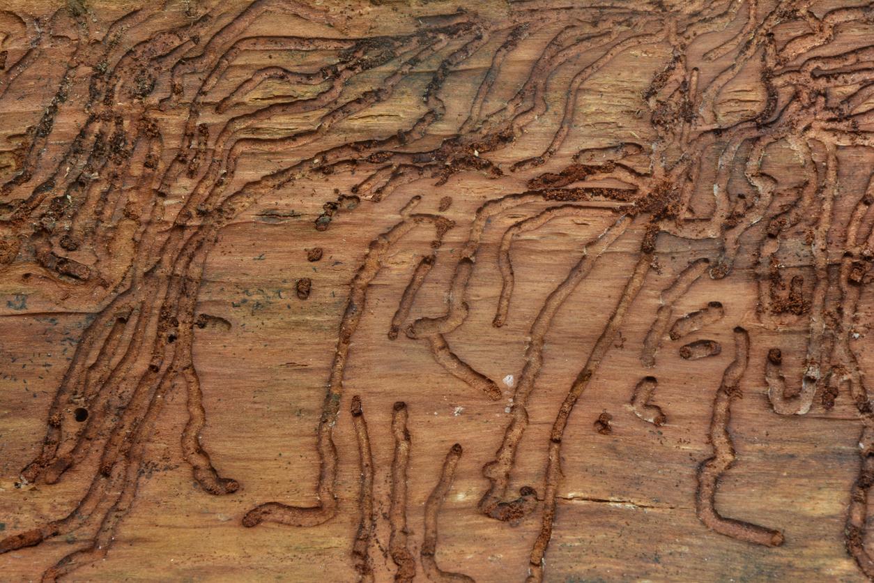 Restaurar vigas madera carcoma stunning cmo eliminar la carcoma de los muebles de mader ud - Como eliminar la carcoma de los muebles ...