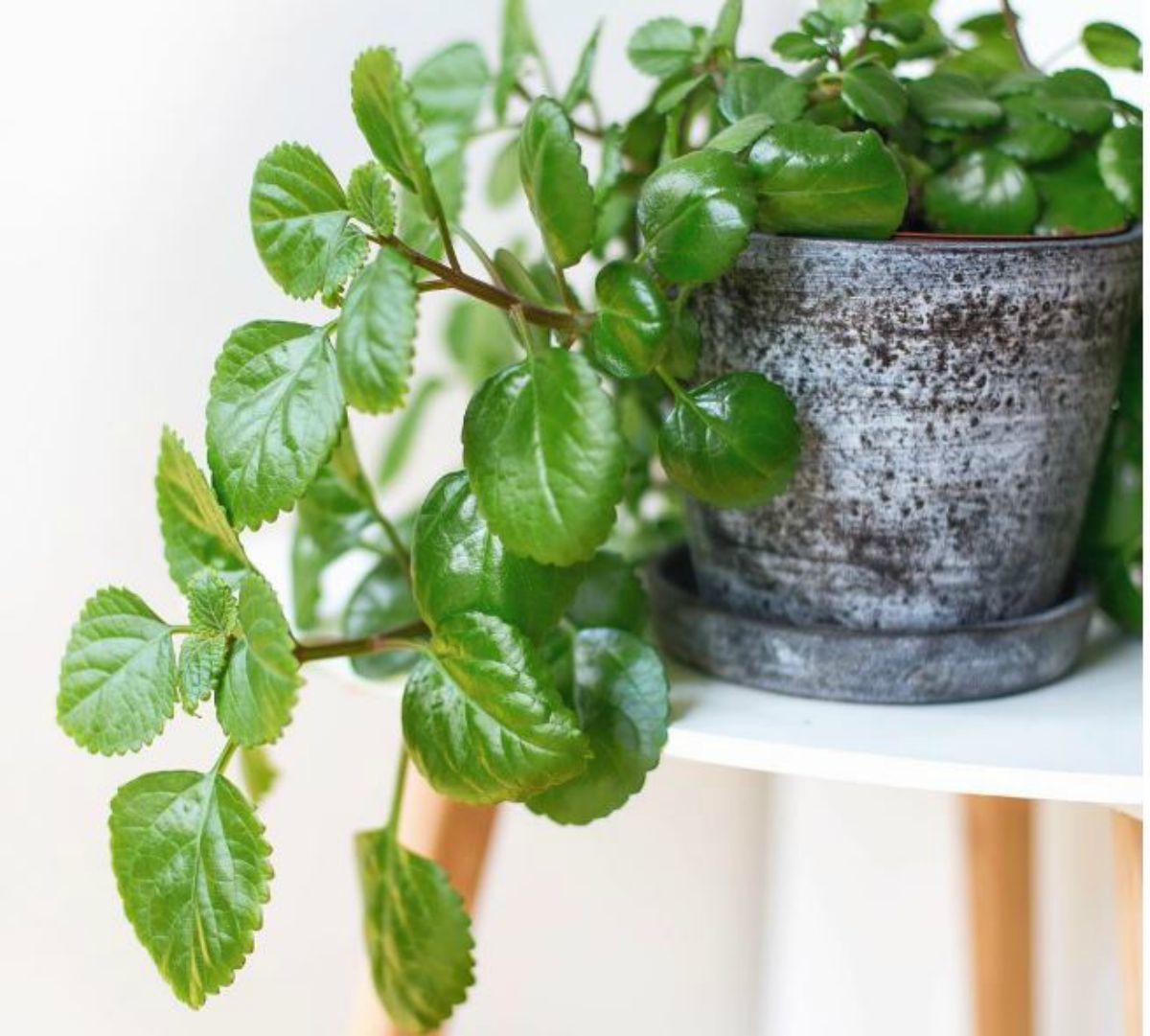 Plantas que aguanten heladas y mucho sol cheap plantas - Plantas que aguanten el sol ...