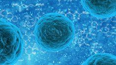 Los ribosomas poseen la capacidad de generar proteínas.