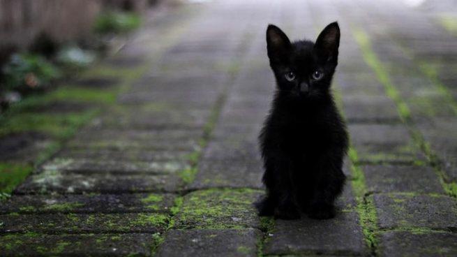 Por Qué Los Gatos Negros Traen Mala Suerte