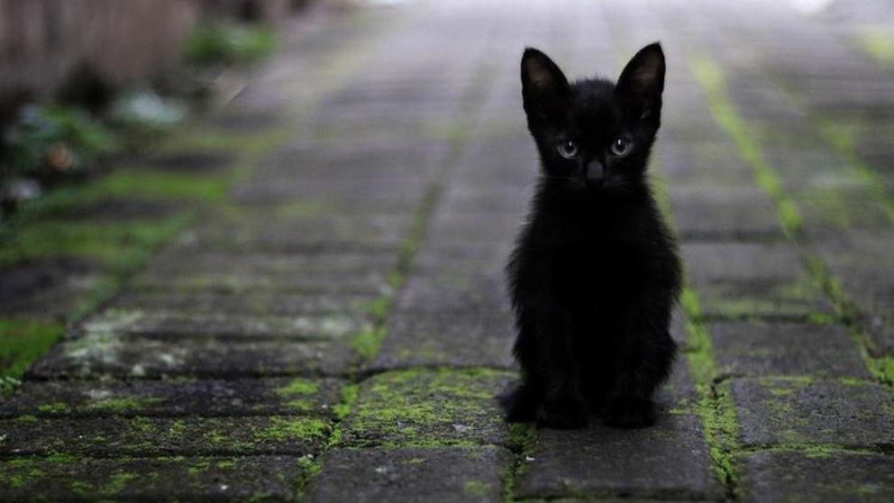 De la superstition - Plutarque
