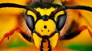 Los mejores repelentes naturales para perder de vista a las abejas