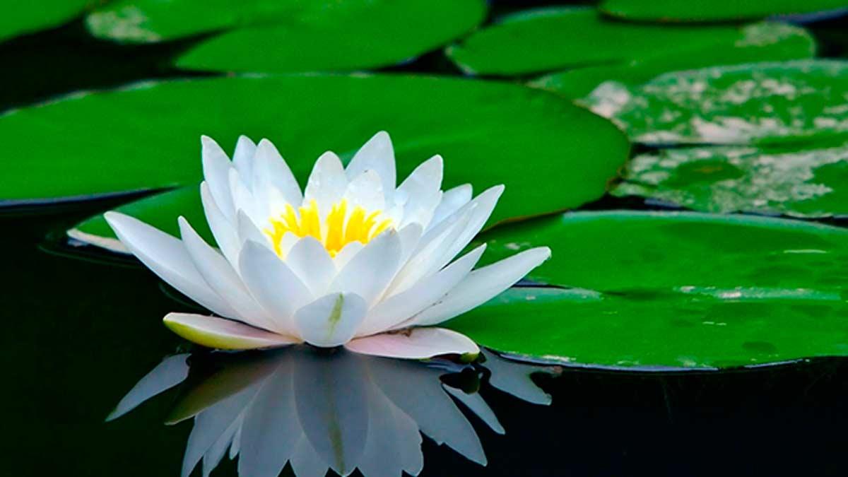 Cuál fue la primera flor de la Tierra?