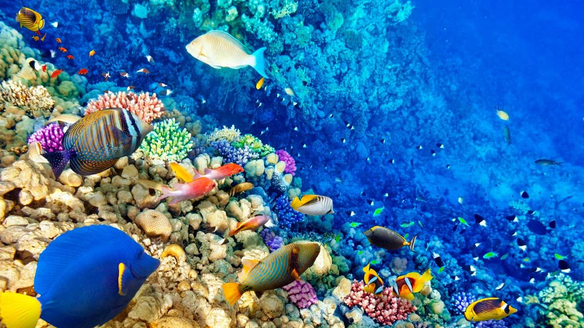 Los arrecifes de coral se caracterizan por su colorido y por la vida que albergan.