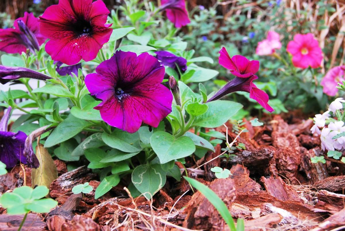 Plantas que aguanten el sol amazing finest flor de - Plantas que aguanten el sol ...