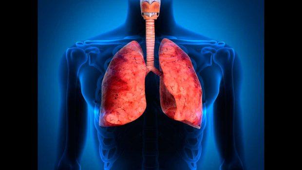 Tipos de respiración de los seres vivos: Pulmonar, branquial y traqueal