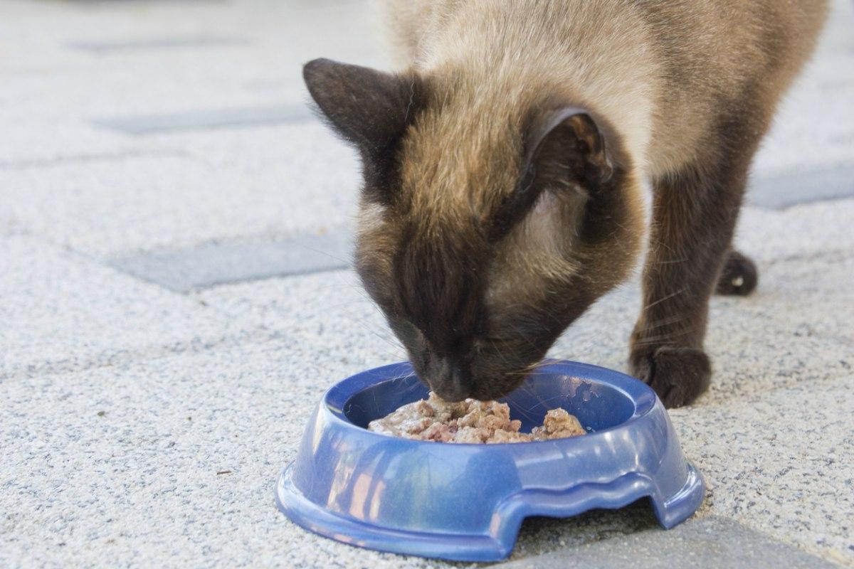 como cuidar de un gato