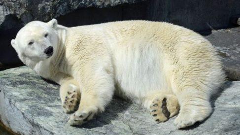 Facebook: Aparece un oso polar con un grafiti en su espalda