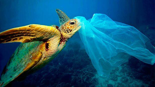 Por qu los peces se comen el pl stico for Estanques plasticos para peces