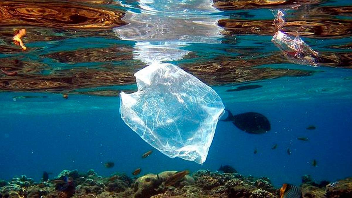 Un estudio ha demostrado que los peces ingieren plástico a propósito.