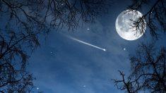 Multitud de estrellas fugaces vuelvan diariamente por el firmamento.