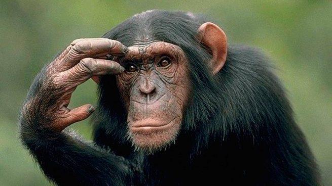 A Qué Simios Nos Parecemos Más