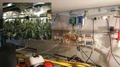 La plantación de marihuana desmantelada en Ibiza y el complejo laboratorio con el contaban los tres detenidos. Fotos: Guardia Civil