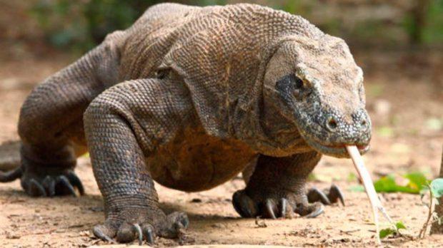 Q Son Los Reptiles Reptiles: Caracter&#23...
