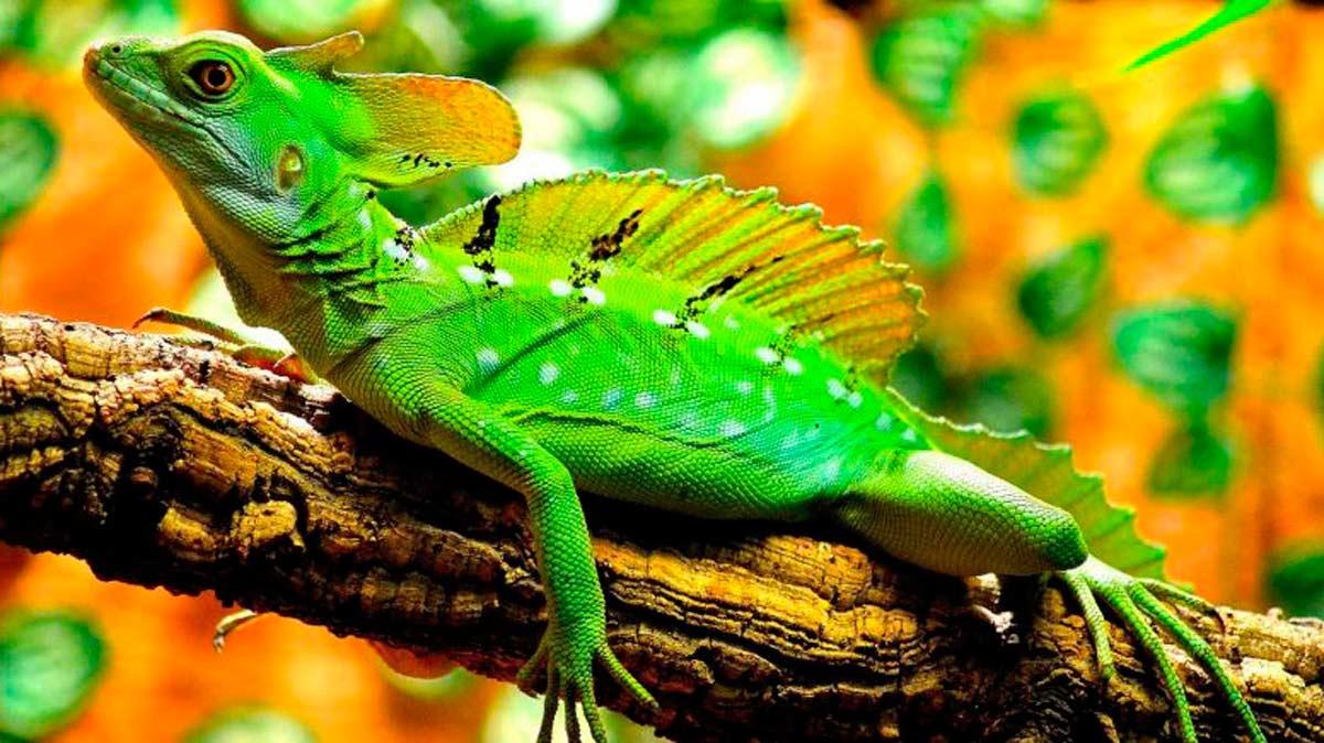 Los reptiles son fundamentales para el ciclo de la vida en nuestro planeta.
