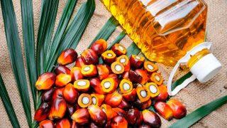 El aceite de palma es tan nocivo para nuestro organismo como para el medio ambiente.
