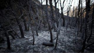 Así ha quedado gran parte del Parque Natural de los Arribes del Duero tras el paso del incendio.