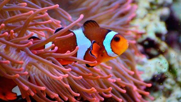 Peces caracter sticas principales y tipos de peces for Productos para estanques de peces