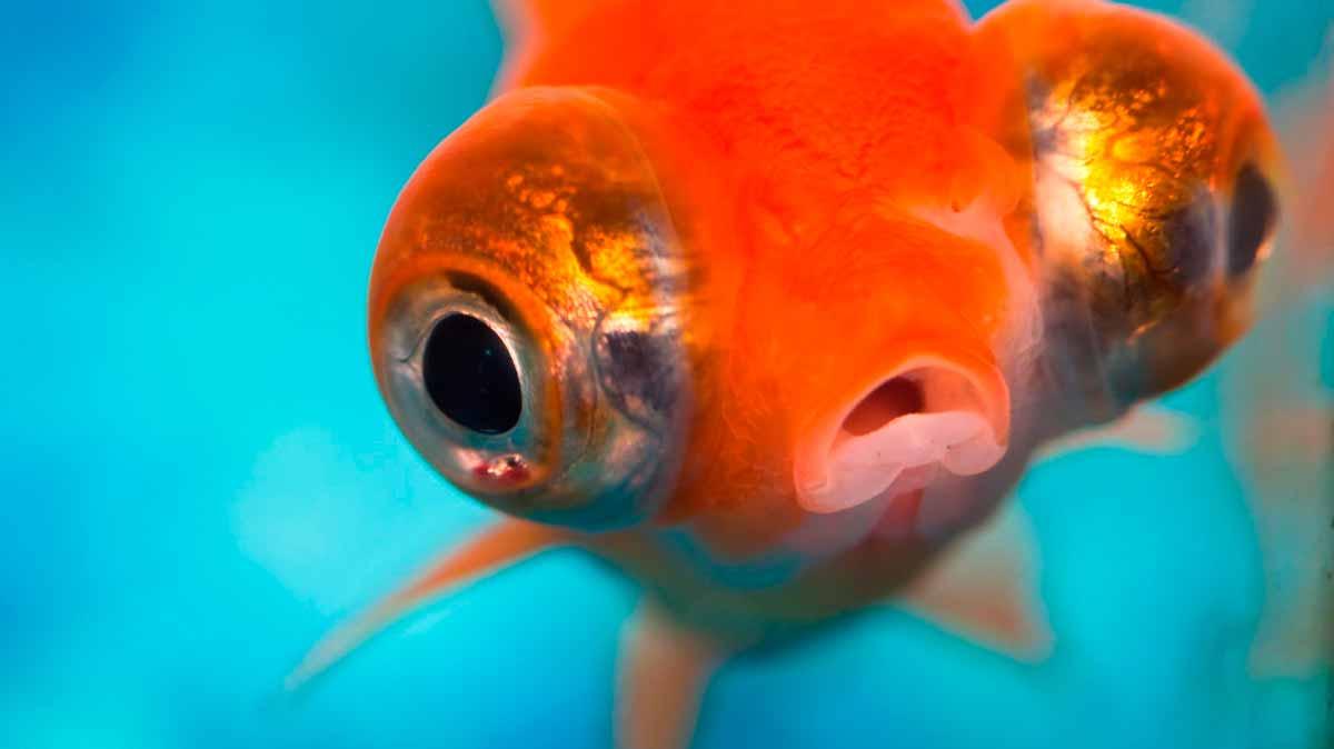 Peces caracter sticas principales y tipos de peces for Variedad de peces