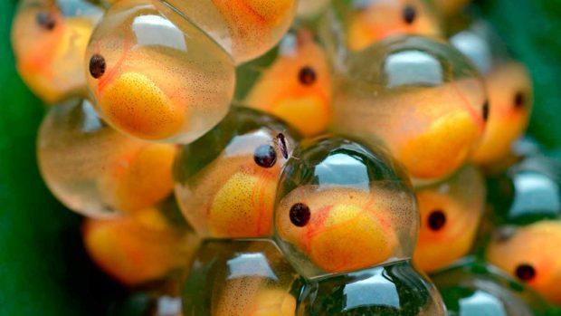 Peces caracter sticas principales y tipos de peces for La reproduccion de los peces