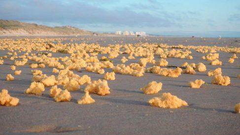 Las misteriosas esponjas amarillas de las costas francesas