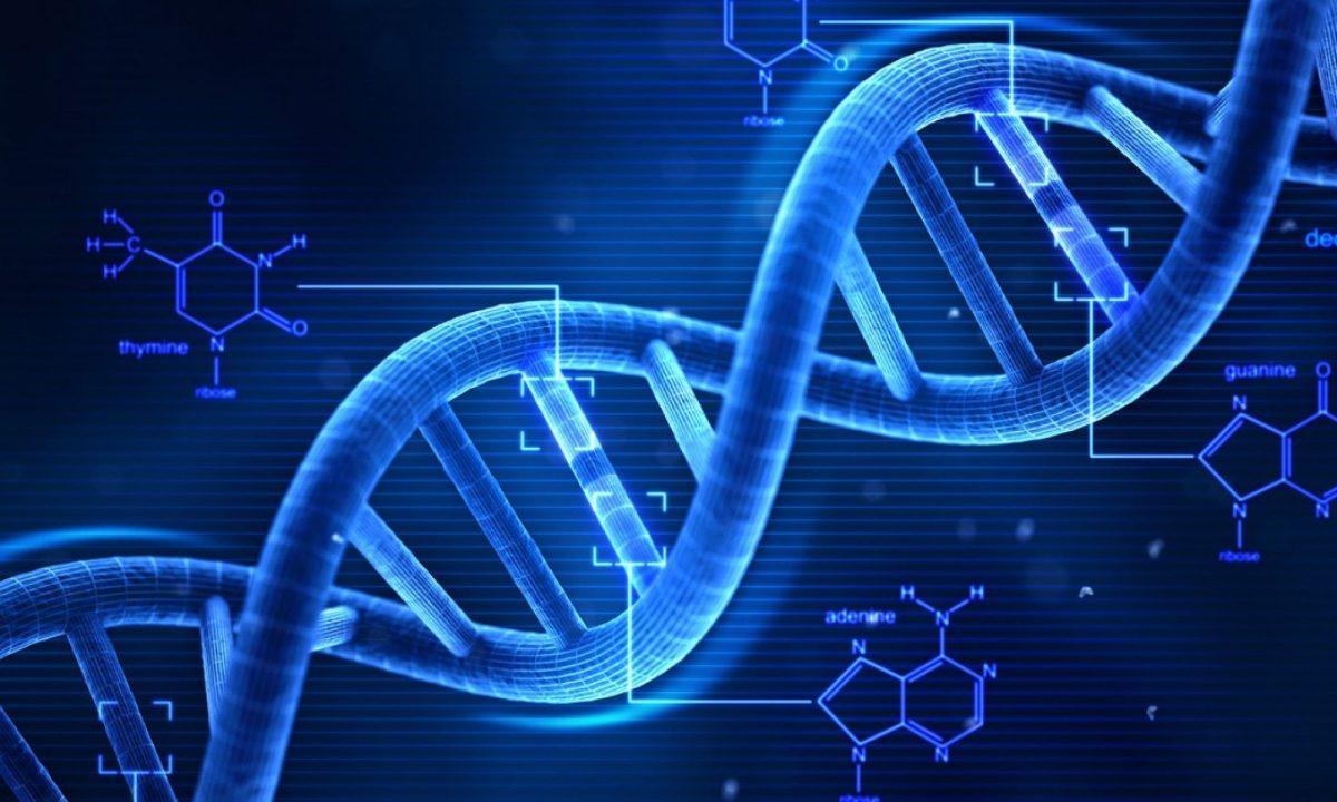 longitud del ADN